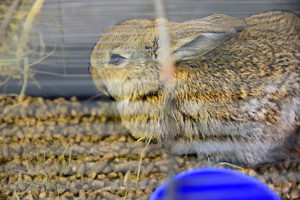 Rabbit-Bedding for small pets Lectum Pets 6.3